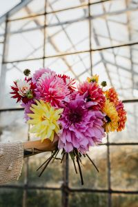 Kaboompics - Beautiful colorful dahlia flowers