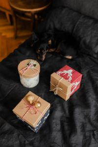 Kaboompics - Christmas gifts for a cute little dog