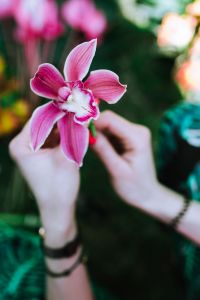 Kaboompics - Orchid flower in female hands