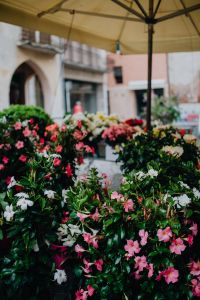 Kaboompics - Flower shop in Castelfranco Veneto, Italy