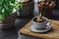 Kaboompics - Little seedling in a cup on a wooden board