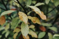 Kaboompics - Close-ups of leaves on trees