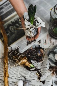 Kaboompics - Woman planting seedlings on a newspaper cover table with quail eggs