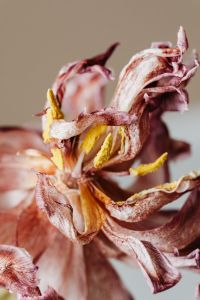 Kaboompics - Dried flowers and leaves - still life backgrounds