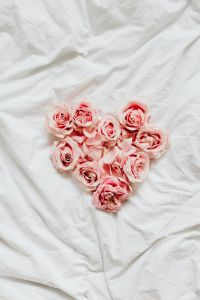 Kaboompics - Pink roses on bedding