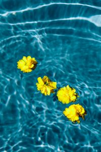 Kaboompics - Small yellow flowers floating in the pool