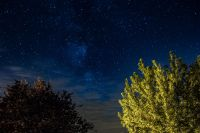 Kaboompics - A trees under the starry sky
