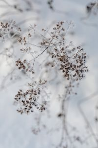 Kaboompics - Frozen flowers - background - wallpaper
