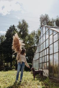 Kaboompics - The woman keeps the Pampas grass, next to her there is a Weimaraner dog