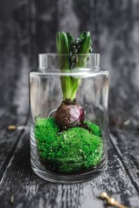 Kaboompics - Green seedling planted in a glass pot