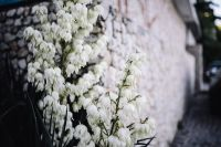 Kaboompics - Bushes of the blossoming yucca