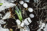 Kaboompics - Seedlings on a newspaper cover table with quail eggs