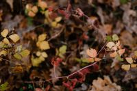 Kaboompics - Forest fruit - autumn leaves