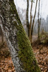 Kaboompics - Moss on a tree