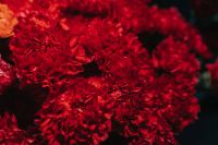 Kaboompics - Close-up of a red flower bouquet