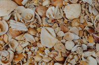 Kaboompics - Sea shells on the beach, Algarve, Portugal