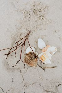 Kaboompics - seashells and a twig on the beach