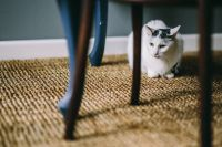 Kaboompics - Black and white cat on a floor under a table