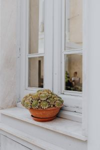 Kaboompics - A cactus in a pot on a window sill