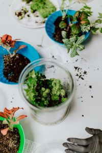 Kaboompics - Building Rainforest Terrarium in a Jar