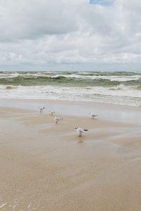 Kaboompics - seagulls on the bech