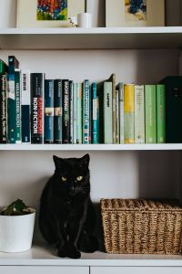 Kaboompics - Black cat by a wicker basket on a white bookcase shelf