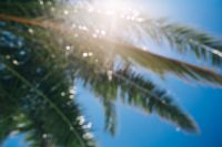 Kaboompics - Blurred palm tree