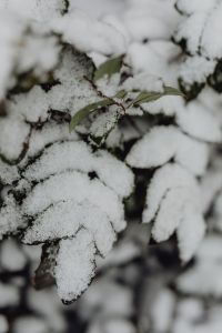 Kaboompics - Branches covered with fresh snow