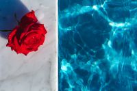 Kaboompics - Marble & fresh garden rose on the blue water of a swimming pool