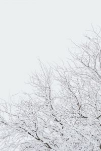 Kaboompics - Snow-covered Trees