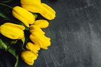 Kaboompics - Yellow tulips on grey background with copy space