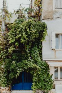 Kaboompics - Blue gate overgrown with climbing plants, Rovinj, Croatia