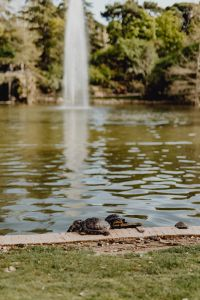 Kaboompics - Turtles in Buen Retiro Park
