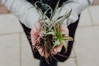 Kaboompics - Different types of Air Plants in womens hands