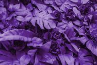 Kaboompics - Pantone Colour Of The Year 2018: Ultra Violet