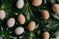 Kaboompics - Fresh eggs on the green leaves
