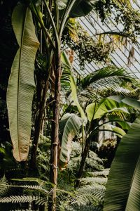 Kaboompics - Tropical plants in botanical gardens