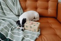 Kaboompics - Christmas - a small dog with a gift on the sofa