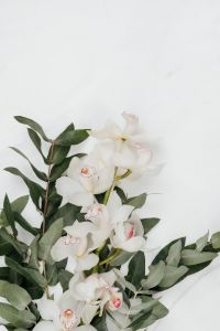 Kaboompics - White Cymbidium Orchid flower with eucalyptus on marble