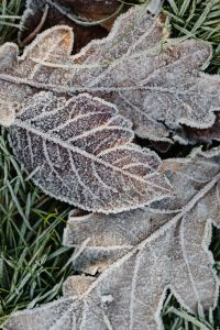 Kaboompics - Morning frost on plants