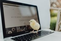 Kaboompics - Newborn little chicken and laptop