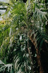 Kaboompics - Tropical palm trees in a botanical garden