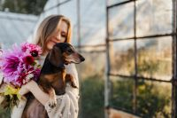 Kaboompics - A woman with beautiful colorful dahlia flowers, holding in her hands a dachshund dog