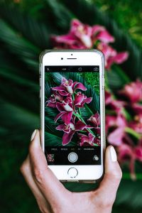 Kaboompics - Hand with mobile phone taking a photo of flowers