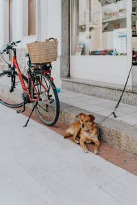 Kaboompics - A little dog on a leash in front of the store
