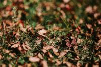 Kaboompics - Brown leaves on the grass