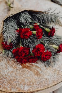 Kaboompics - Winter bouquet with red carnations and pine