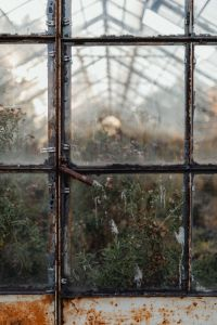 Kaboompics - Dried plants in greenhouse