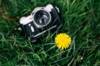 Kaboompics - Vintage camera with yellow flower