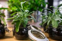 Kaboompics - Green plants in glass jars on a table